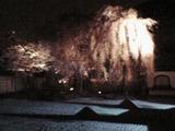 高台寺の夜桜