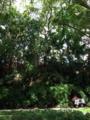 シンガポールの公園で勉強