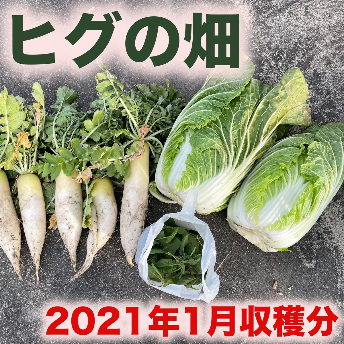 f:id:goodsun0212:20210111190338j:plain