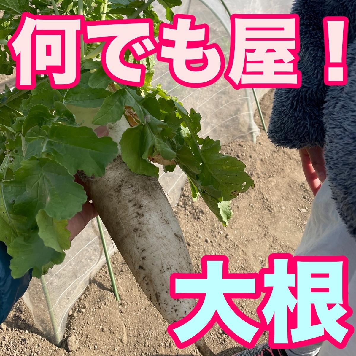 f:id:goodsun0212:20210126210951j:plain