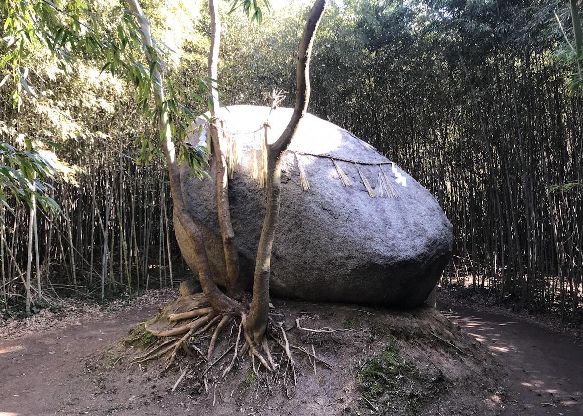 木に支えられているように横たわる神石