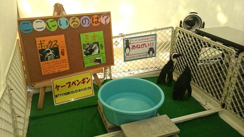 ケープペンギンの「ボックスくん」と「ミオちゃん」