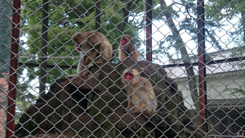 天守閣で飼われている猿