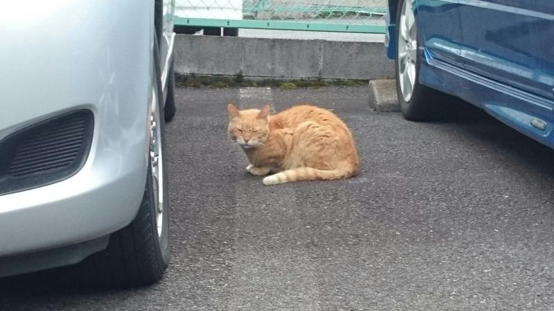 車の間に隠れている猫