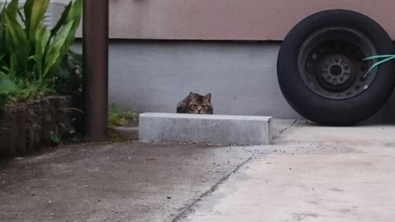 車止めに隠れたつもりでいる猫