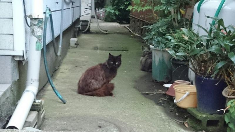 民家の隙間にいる猫