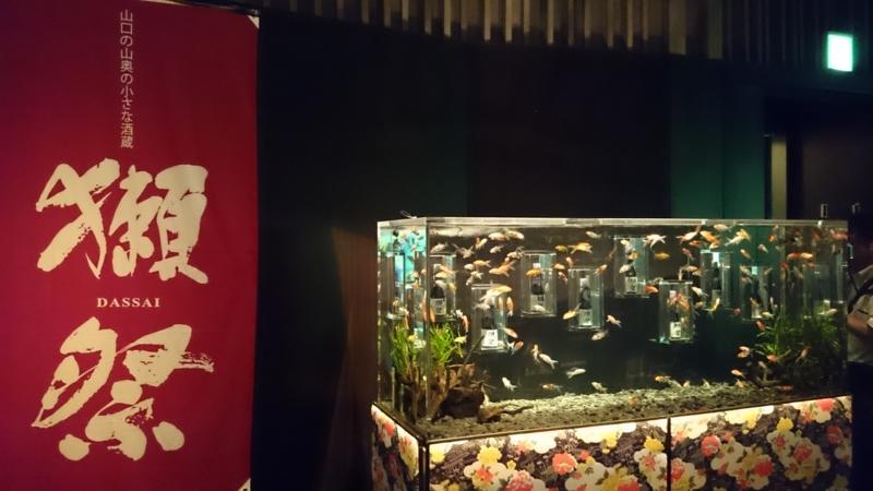 金魚と一緒に獺祭ナイト