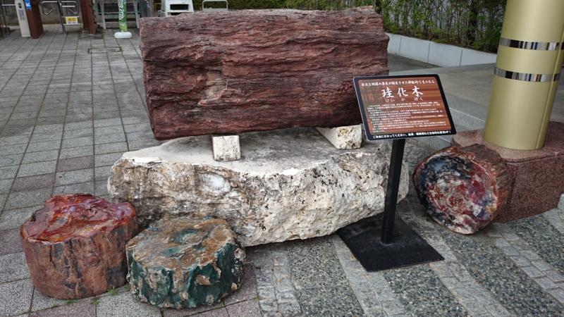 神秘的な木の化石