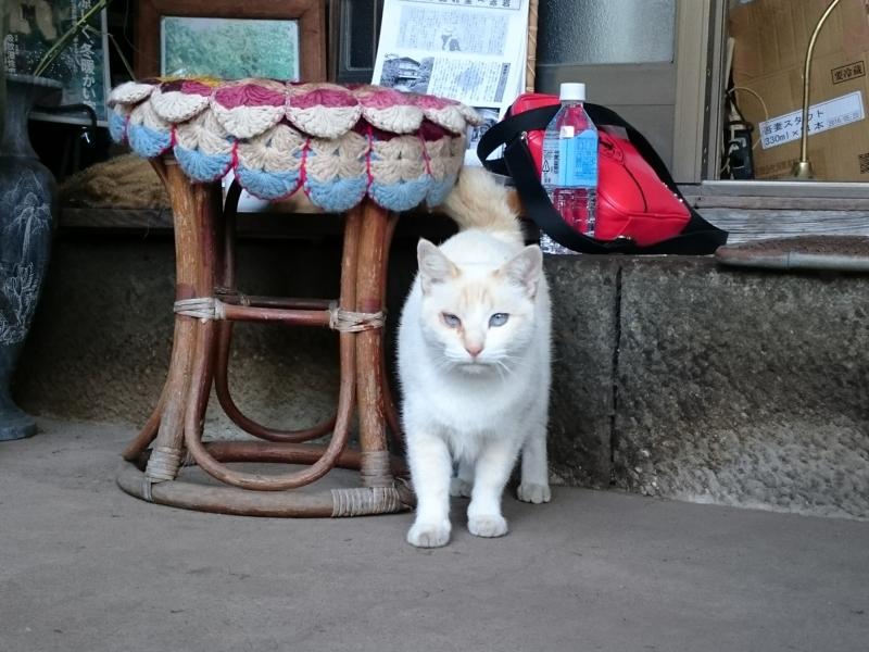 湯本家の猫、あおちゃん