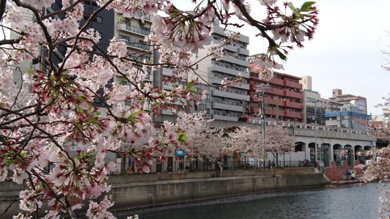 桜と京急線