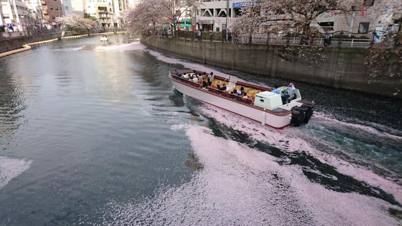 大岡川を流れる桜の花びら