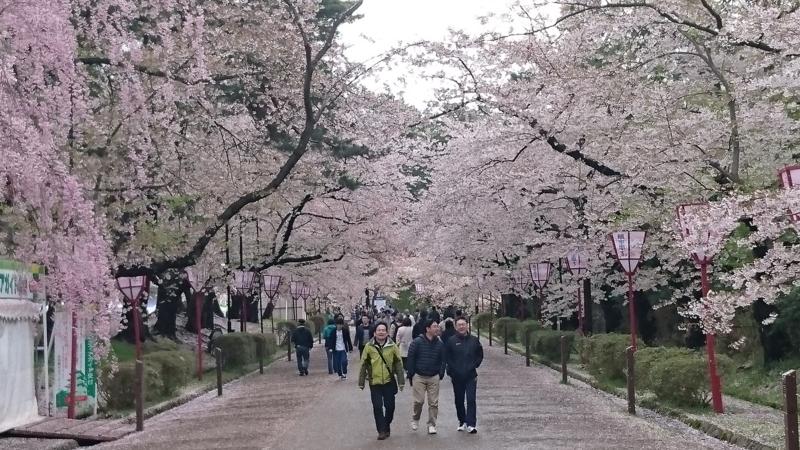 桜並木を歩く人々