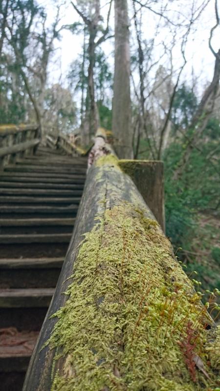 階段に茂る苔
