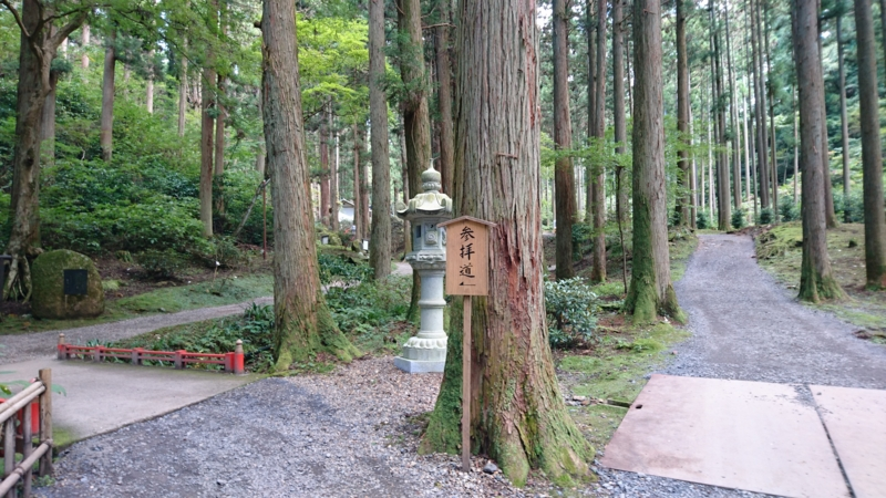 杉林の中の参道