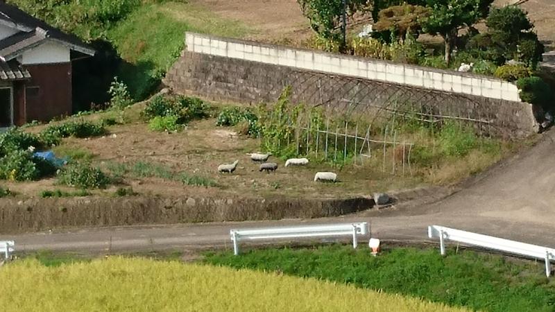 民家の畑にいる動物をズームで見てみました