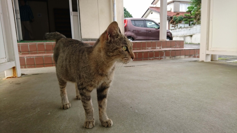 旧富士ヶ丘小学校にいた野良猫