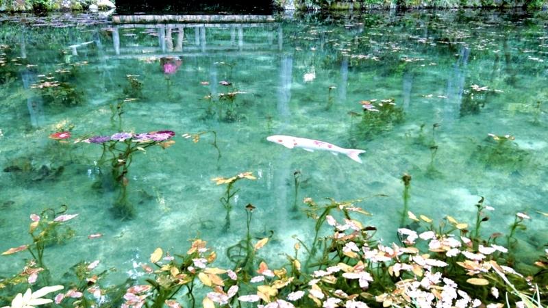 鬼加工した「モネの池」