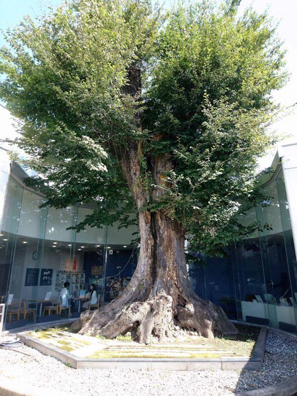 庭にそびえ立つ大木