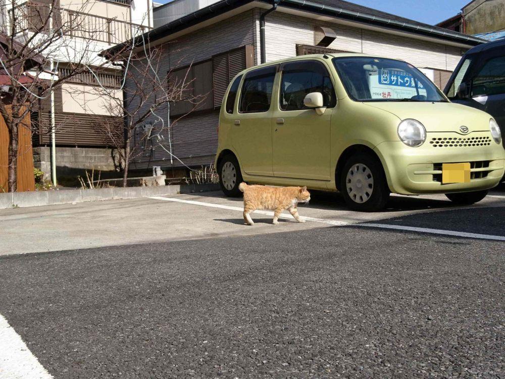 三崎の茶色い猫