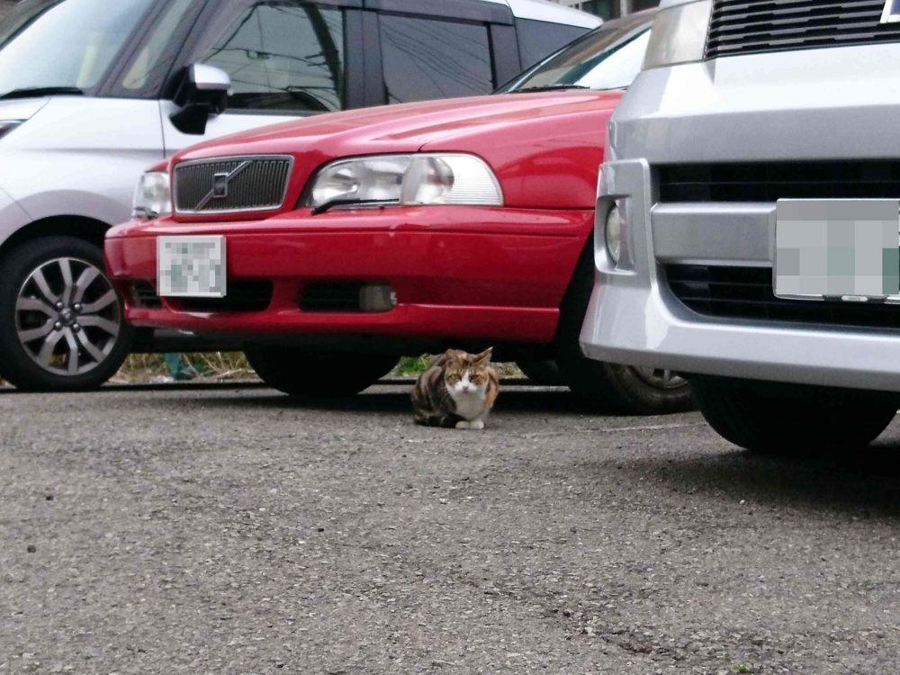 車の下に隠れる野良猫