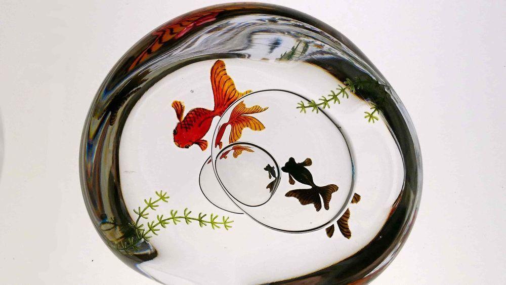 ガラスの中で泳ぐ金魚