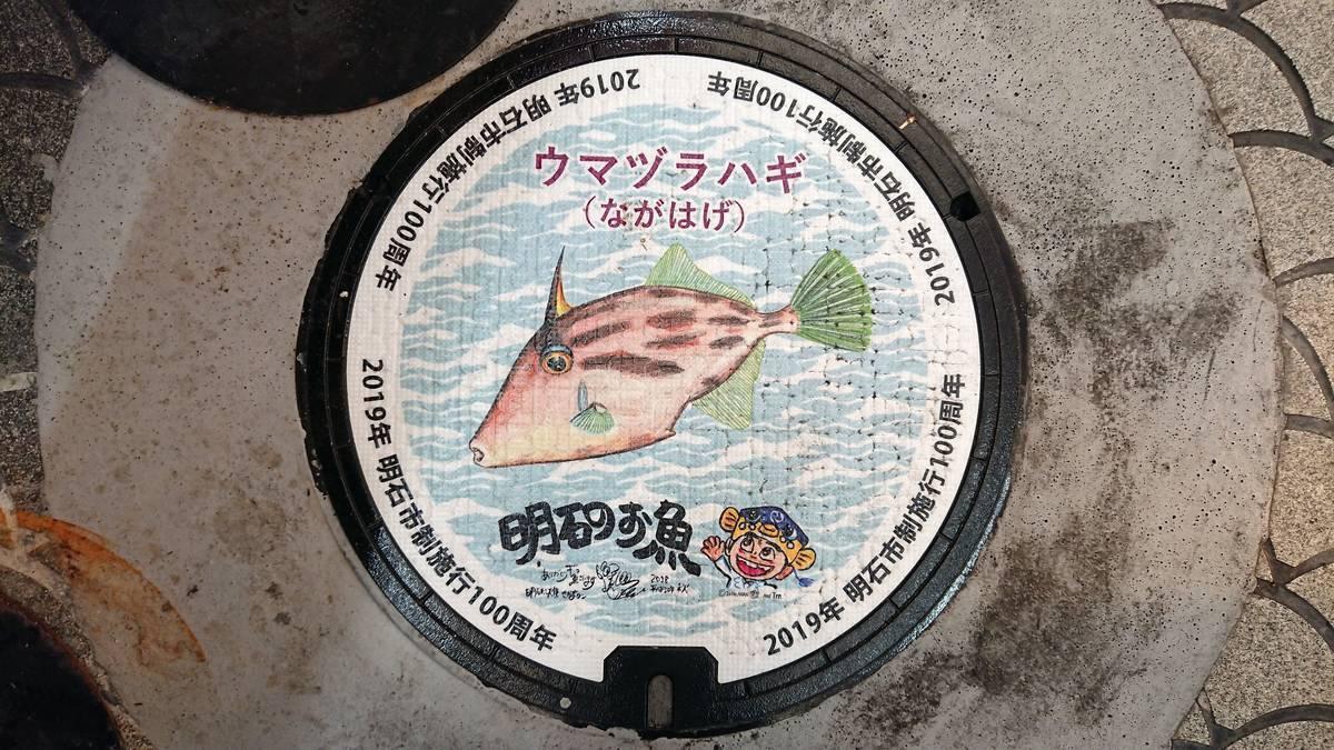 兵庫県明石市のマンホール(市制施行100周年記念、ウマヅラハギ、さかなクン)[カラーシール]