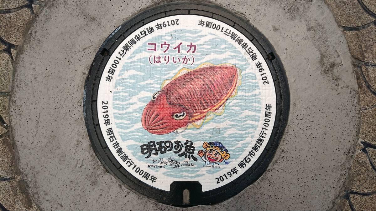兵庫県明石市のマンホール(市制施行100周年記念、コウイカ、さかなクン)[カラーシール]