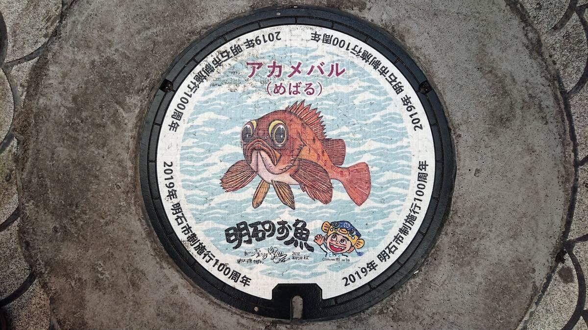 兵庫県明石市のマンホール(市制施行100周年記念、アカメバル、さかなクン)[カラーシール]