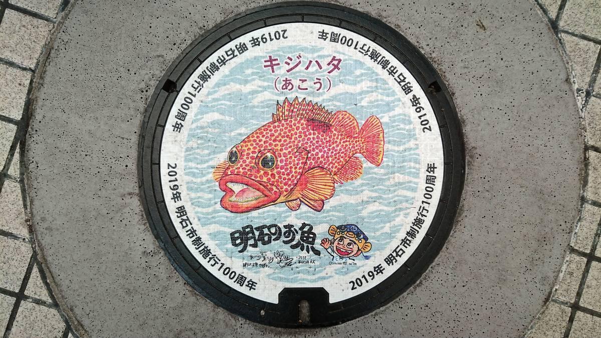 兵庫県明石市のマンホール(市制施行100周年記念、キジハタ、さかなクン)[カラーシール]
