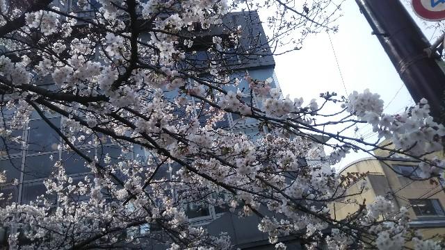 f:id:gorihisa:20190329173438j:image