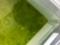オロチ稚魚④