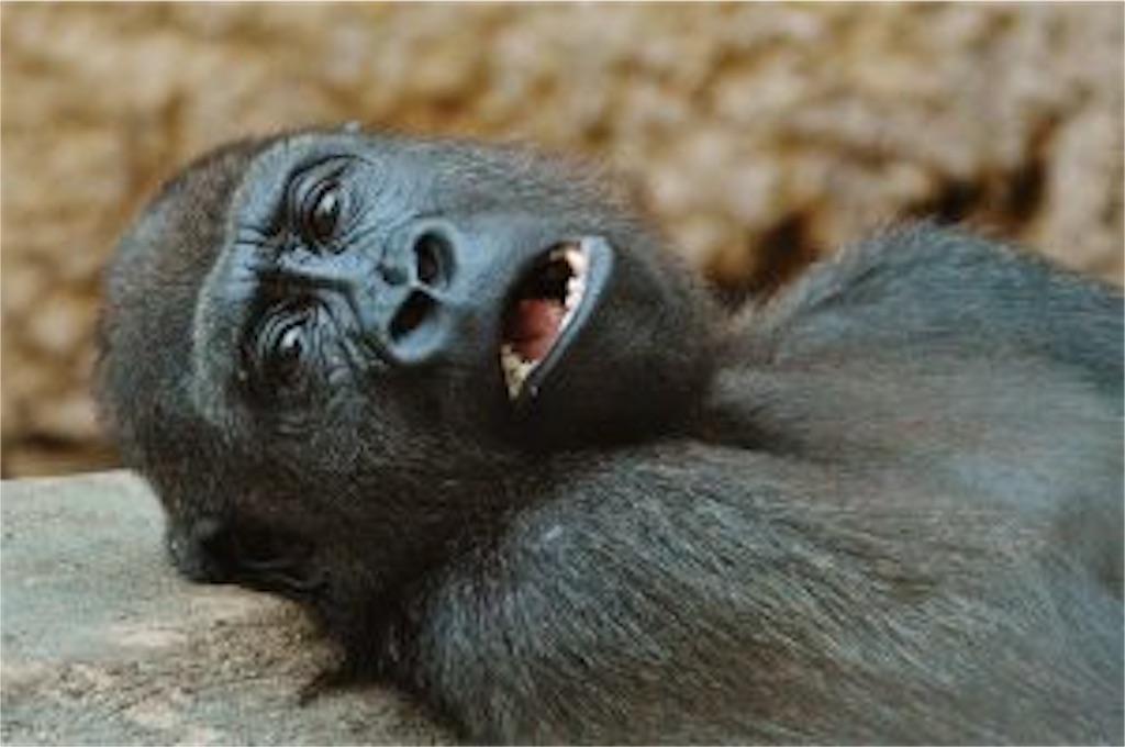 f:id:gorilla-coc-itogun:20210710160110j:image
