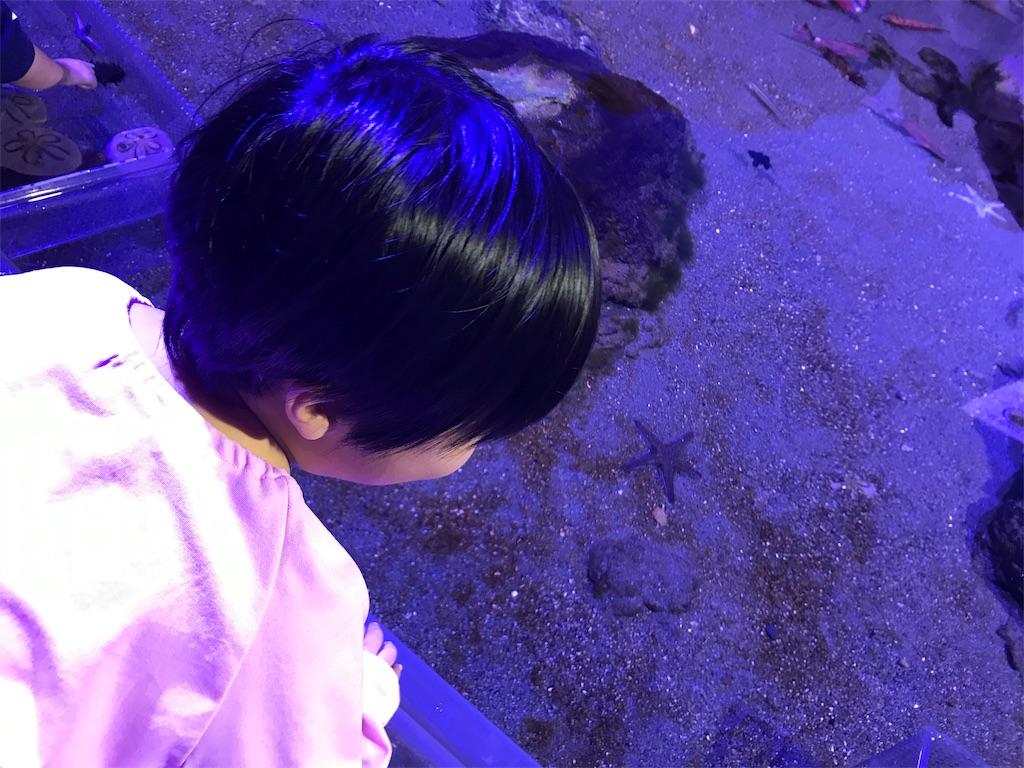 f:id:gorinosuke:20191231152714j:image