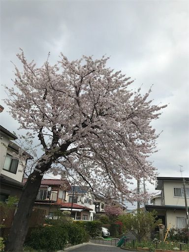 f:id:gorinosuke:20200405153319j:image