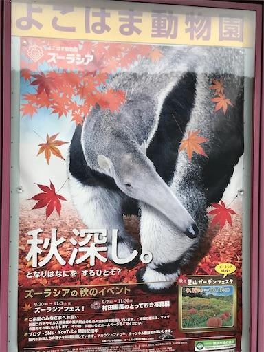f:id:gorinosuke:20200920140220j:plain