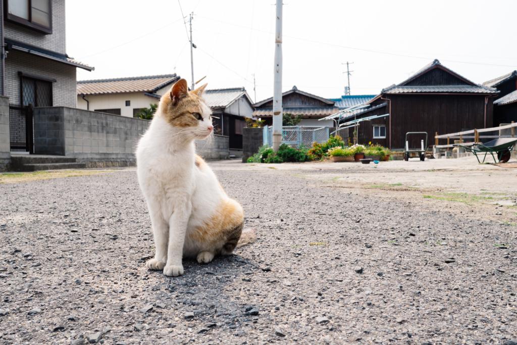 f:id:gorotaku:20160330104018j:plain