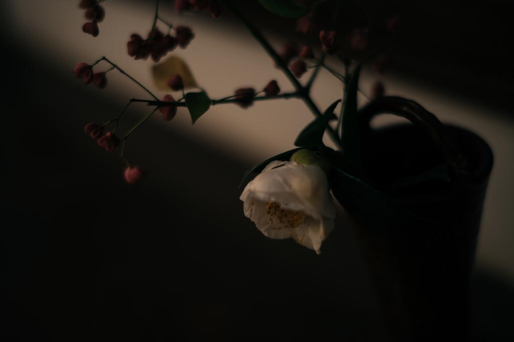 f:id:gorotaku:20181125163606j:plain