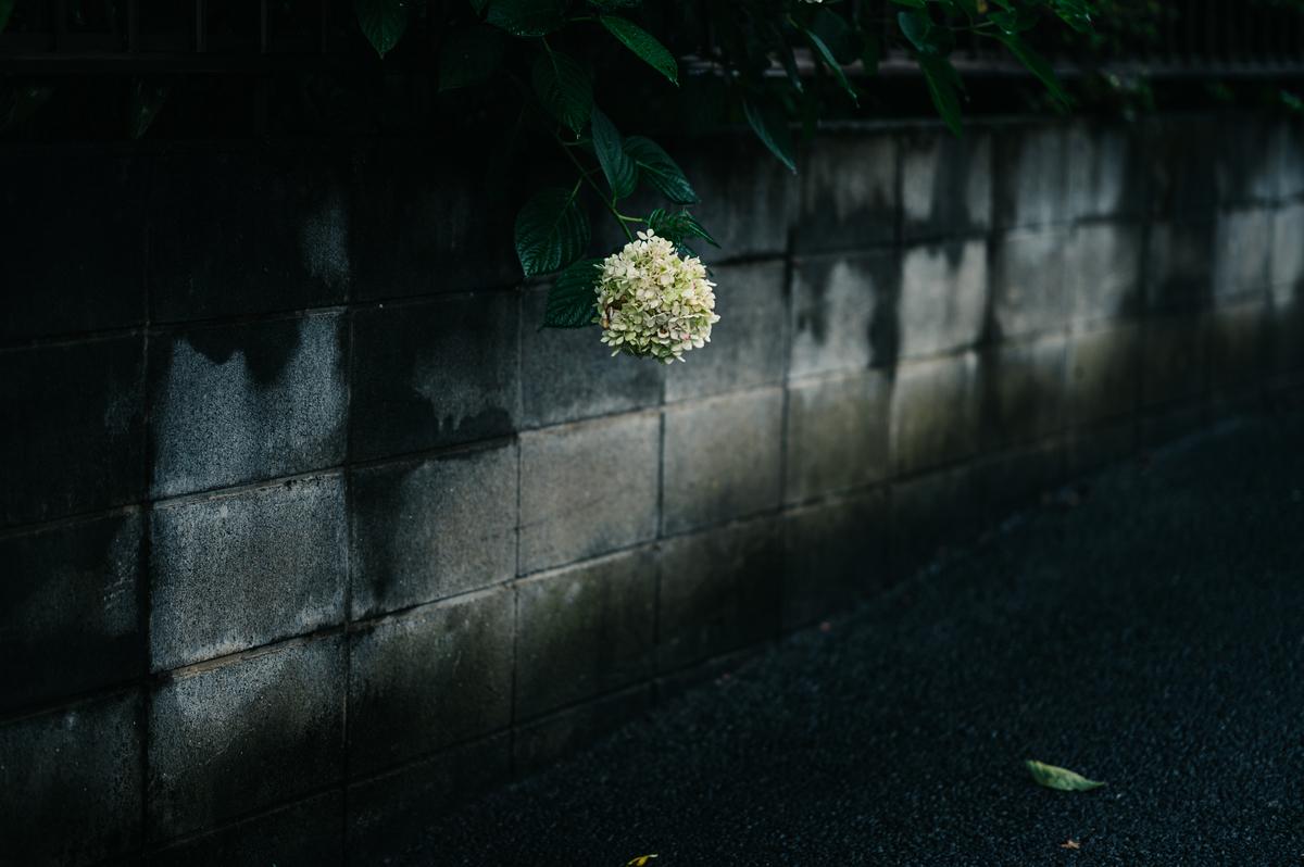 f:id:gorotaku:20200723193930j:plain