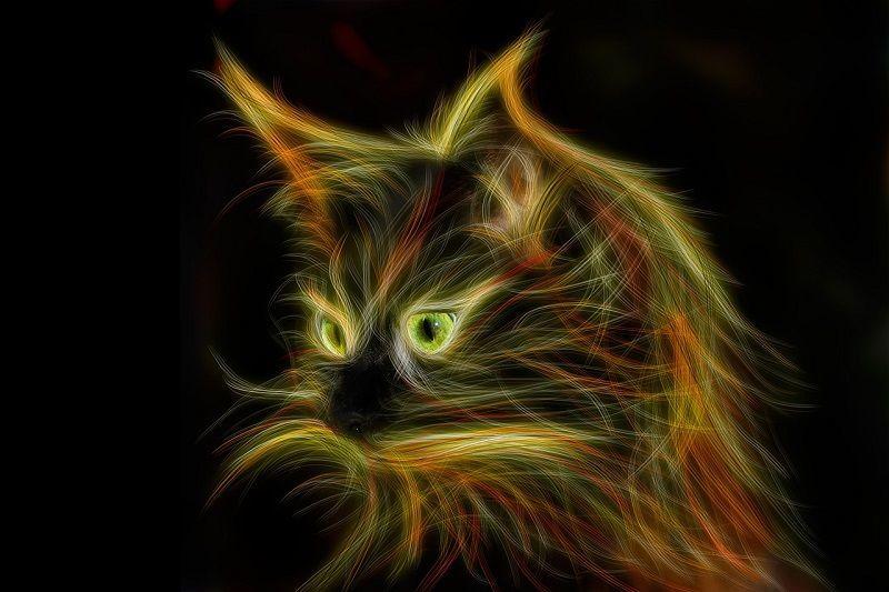 cat ねこ