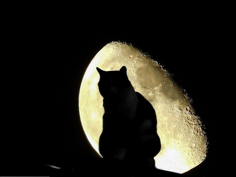 ねこ cat