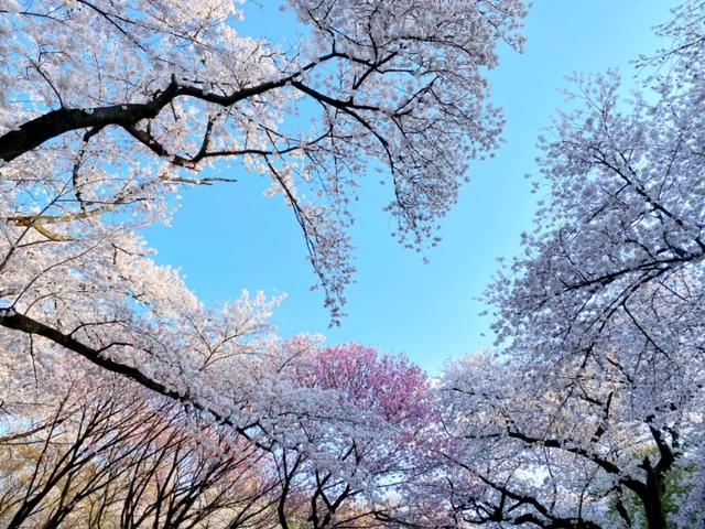 f:id:gotoshin_terumi:20210326164551j:plain