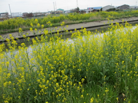 f:id:gotouma:20120415100828j:image