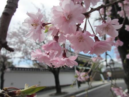 f:id:gotouma:20120415103720j:image