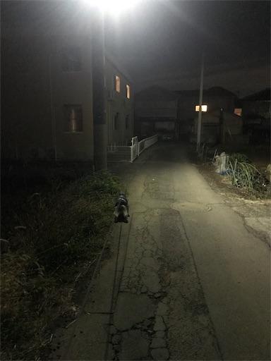 f:id:goukakuhonpo:20190208202558j:image