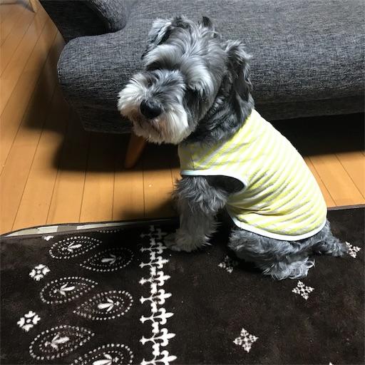 f:id:goukakuhonpo:20190210195151j:image
