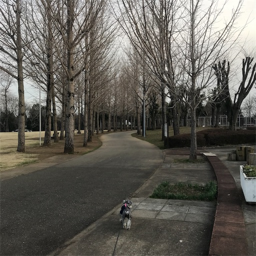 f:id:goukakuhonpo:20190322145105j:image