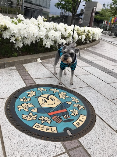 f:id:goukakuhonpo:20190511111436j:image