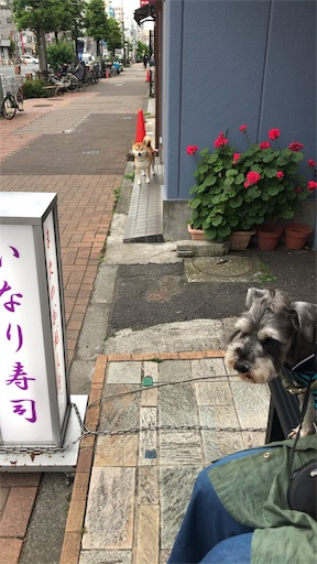 f:id:goukakuhonpo:20190516111230j:image