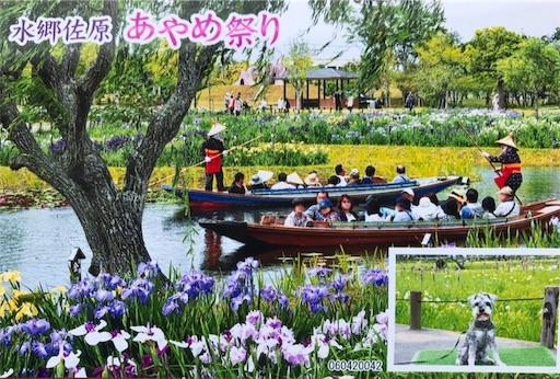 f:id:goukakuhonpo:20190604124648j:image