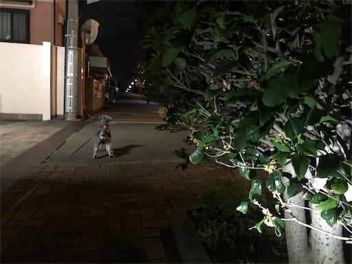 f:id:goukakuhonpo:20191016222426j:image